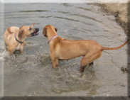 Eagleridge ridgebacks at the river